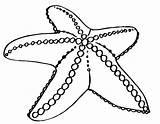 Starfish Coloring Getdrawings Coloringtop sketch template