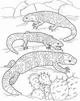 Coloring Pages Lizard Lizards Desert Fat Printable Gila Animals Supercoloring sketch template