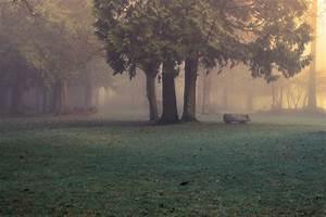 Fog Forest Wallpaper (63+ images)