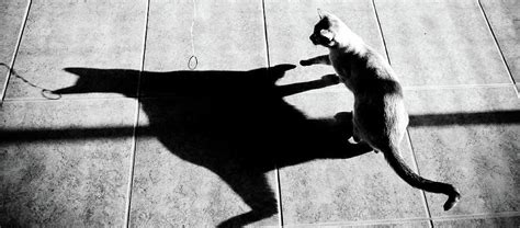 Shadow Cat Photograph By Scott Sawyer