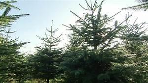Baum Fällen Zeitraum Schleswig Holstein : start der christbaumsaison in schleswig holstein rtl nord ~ Whattoseeinmadrid.com Haus und Dekorationen