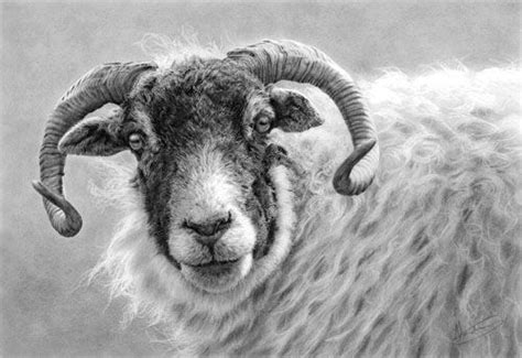 drawing pencil graphite images  pinterest