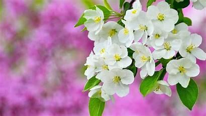 Spring Wallpapers Blossom Sapling Vector