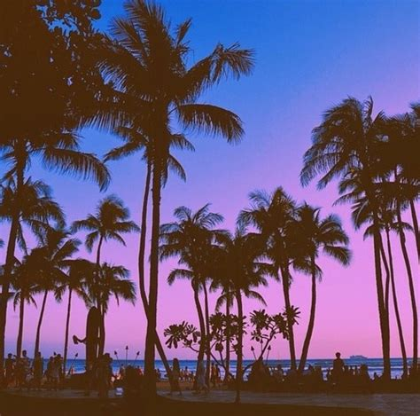 palm trees backgrounds tumblr