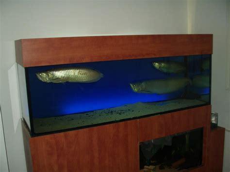 aquarium 500 liter 500 liter reef from israel reef2reef saltwater and reef aquarium forum