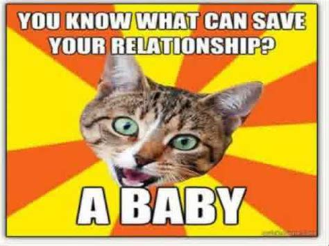 Funny Cat Memes Clean - the 31 funny cat memes clean youtube