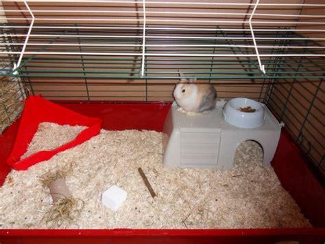 tapis absorbant cochon d inde comment amenag 233 la cage de mon lapin hamsters cochons d inde lapins forum animaux