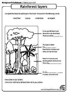 rainforest worksheet for layers of the rainforest