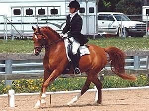 Michigan State University :: Human and Equine Alumni
