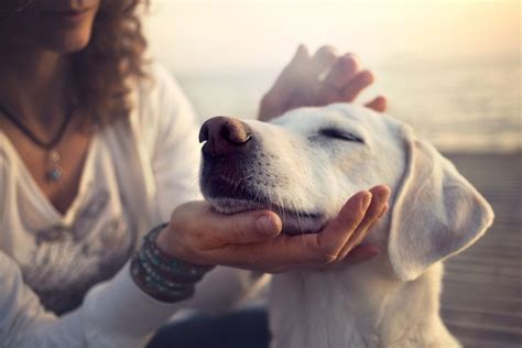 dogs gently indisputable reasons cats better than why dog unconditional offer