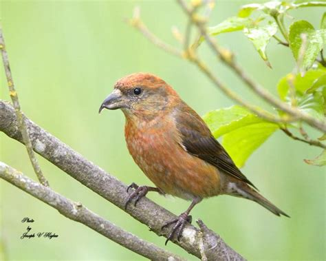 1000 images about pnw birds on pinterest