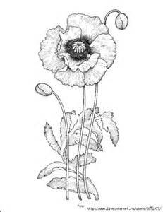 design sticken mohnblumen zeichnungen and tattoos on