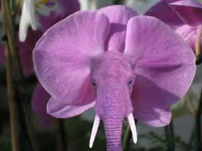 purple calla orchid that looks like an elephant i really about