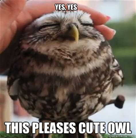 Awwww Meme - yes yes this pleases cute owl cute owl quickmeme
