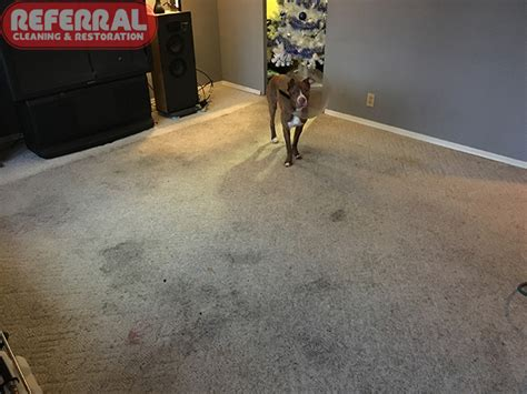 Referral Cleaning & Restoration How To Remove Carpet Stains From Wood Floors Cleaners Near Albany Ny Buffalo Factory Fire Cleaning Dog Urine Silk Services Iowa City Call Locations Wa Bigfoot Chico Ca Lay Padding On Stairs