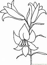 Lily Coloring Pages Easter Drawings Printable Lilies Flower Drawing Outline Clipart Lilly Holidays Tattoo Coloringpages101 Flowers Library Template Stargazer Patterns sketch template