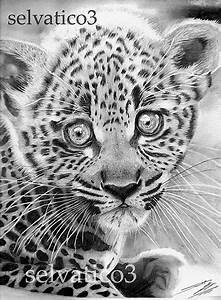 Realistic Animal Pencil Drawings Detailed Pencil Drawing