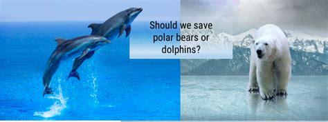 save dolphins  polar bears
