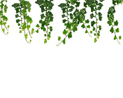hanging vine plants hanging vines png by moonglowlilly on deviantart