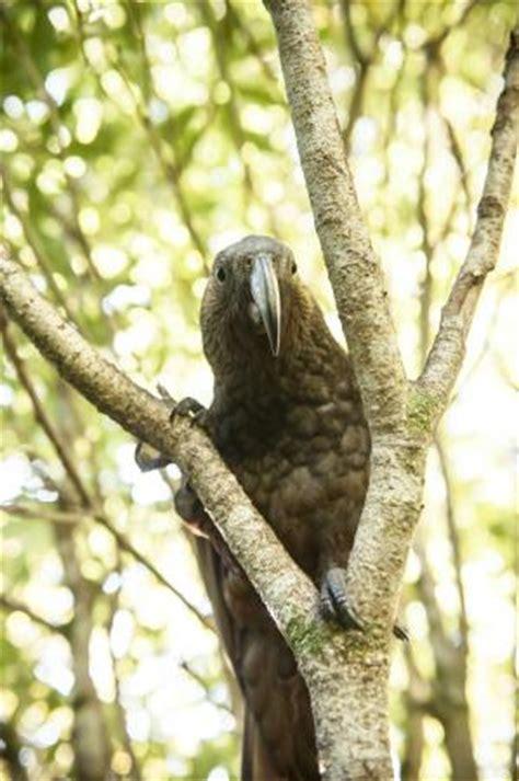 pukaha mount bruce national wildlife centre masterton