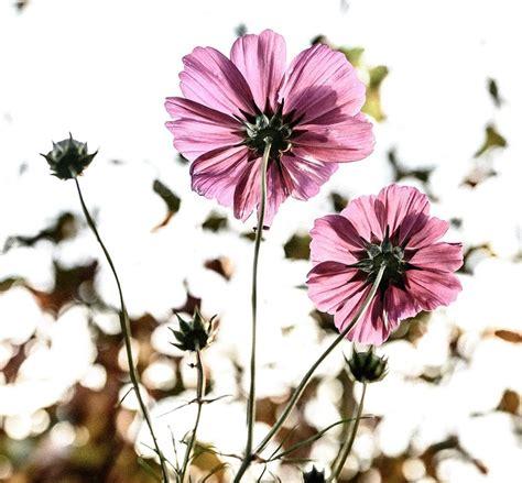 coltivare fiori incontro per imparare a coltivare i fiori piacenzaonline