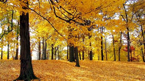 Beautiful Fall Backgrounds Hd by Hd Wallpapers Widescreen Pictures