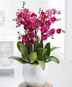 Orchidee Vanda Pflege : orchidee vanda kaufen orchidee vanda purple violet beauty ~ Lizthompson.info Haus und Dekorationen