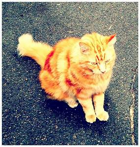 Beautiful Stranger – Ginger Cat | P & P Furball Factory