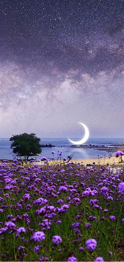 Purple Flowers Wallpapers Scenery Beach Desktop Surreal