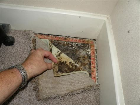 Mold Removal & Mold Inspection Services In Calgary, Alberta