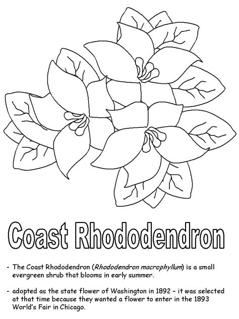 how to draw a rhododendron coast rhododendron coloring page