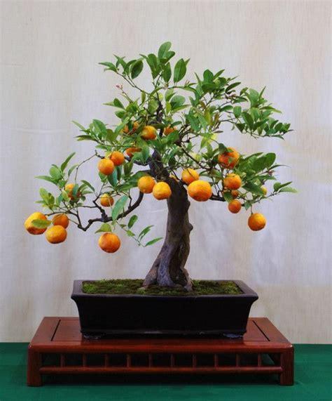 bonsai baum für draußen bonsai baum diese ausgefallene pflanze n 228 kennenlernen