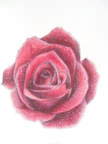 Pink Realistic Rose Drawing