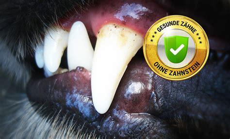 hund zahnstein entfernen ii tipps fuer gesunde zaehne