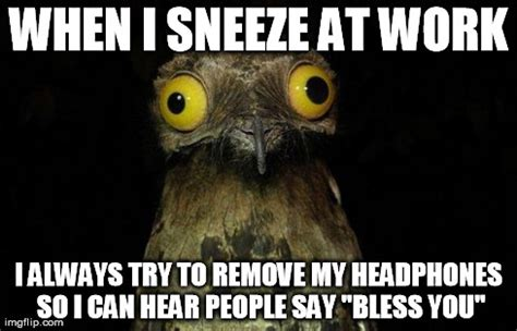 Potoo Bird Meme - potoo meme pictures to pin on pinterest pinsdaddy