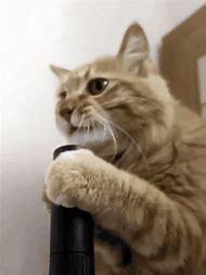 Cat Vacuum Funny