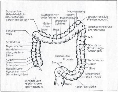 Natürliche darmreinigung anleitung
