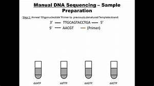 Manual Dna Sequencing