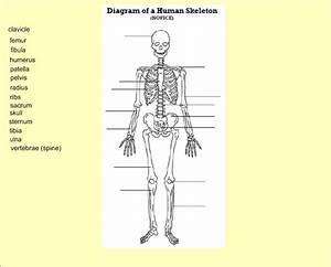 SeventhScience / Skeletal System
