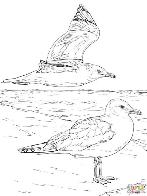 Coloring Foto by Two California Gulls Coloring Page Free Printable