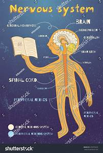 Human Nervous System Kids Vector Color Stock Vector