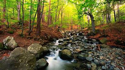 Stream Nature Forest Mountain Tree Landscape Importance