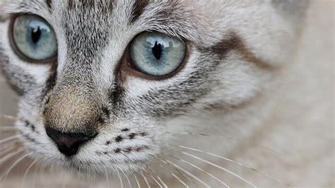 homoeopathie bei der katze  gibt man wofuer