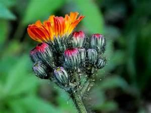 Blumen Im Juli : kostenlose foto natur bl hen fotografie sommer ~ Lizthompson.info Haus und Dekorationen