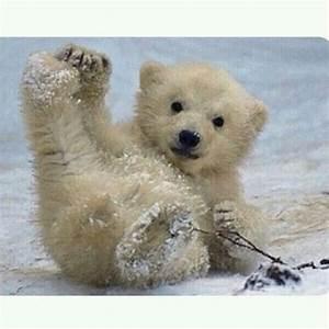 Cute Polar Bear... Cute Bear Quotes