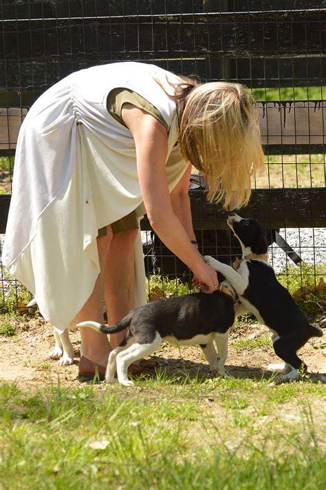 greenmore farm animal rescue collaboration oxford handbags