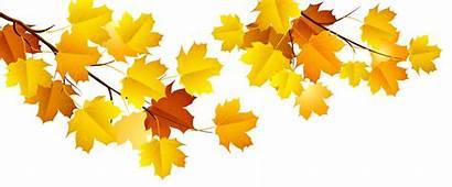 Autumn Fall Branch Clipart Tree Transparent Clip