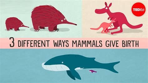 The three different ways mammals give birth Kate