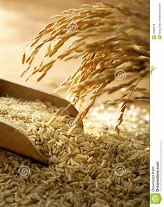 Rice Grain Stock Photo  Image Of Asia  Cooking  Bran