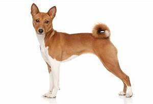 all dog breeds list in the world a to z